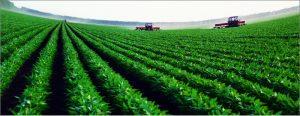 intensive-farming
